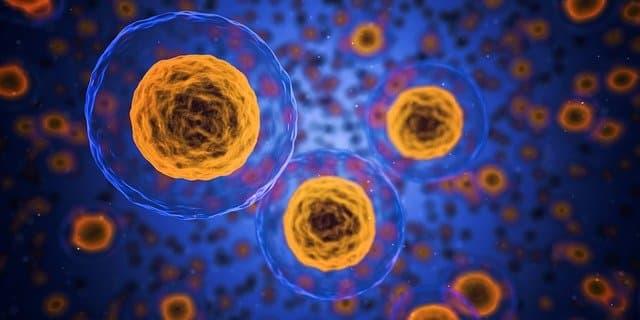 celulas-organismo