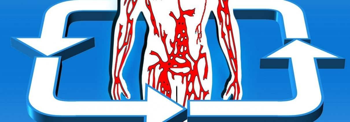 sistema-circulatorio-PIXABAY